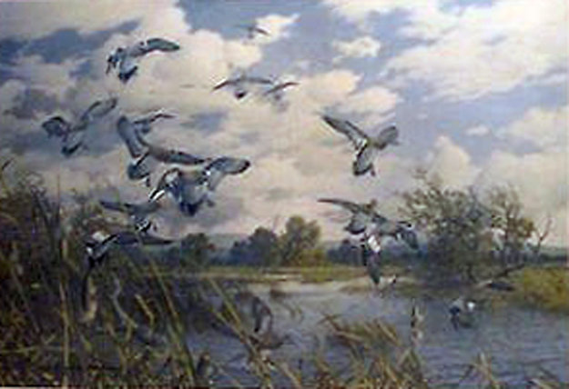 Wild Heritage Widgeon Limited Edition Print by Harry Curieux Adamson