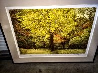 Yellow Tree 1987 Limited Edition Print by Harold Altman - 1