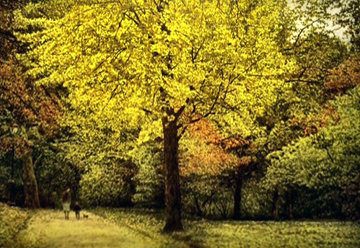 Yellow Tree 1987 Limited Edition Print by Harold Altman