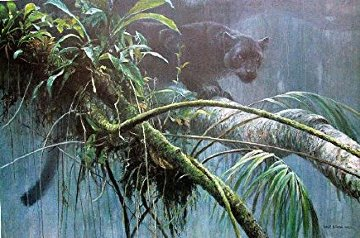 Shadow of the Rainforest 1993 Limited Edition Print - Robert Bateman