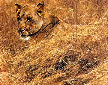 In the Grass - Lioness  Limited Edition Print - Robert Bateman