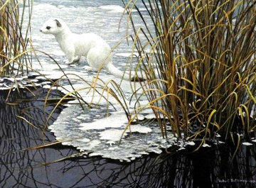Edge of the Ice - Ermine 1981 Limited Edition Print - Robert Bateman