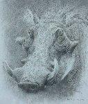 Warthog Drawing 1997 17x15 Drawing - Robert Bateman