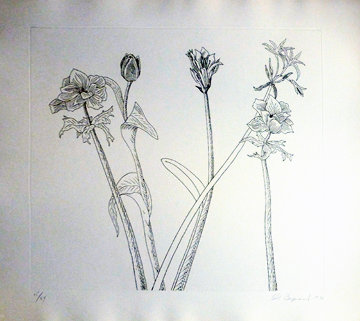 Flowers, Boxed Suite of 7 Etchings Limited Edition Print - Ed Baynard