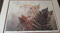 Ferns Limited Edition Print by Elton Bennett - 1