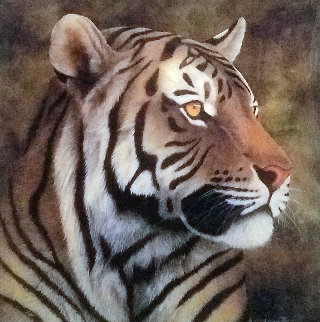 Tiger Portrait 2012 Limited Edition Print by Andrew Bone