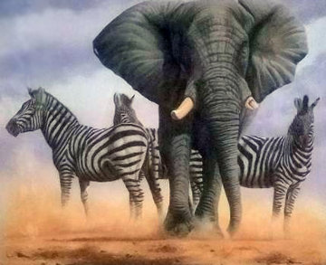 Ghost of Etosha 2012 Limited Edition Print by Andrew Bone
