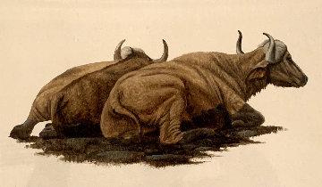 Buffalo Wallowing 2014 22x25 Original Painting by Andrew Bone