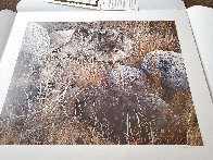 One-to-One (Grey Wolf) 1991 Limited Edition Print by Carl Brenders - 1