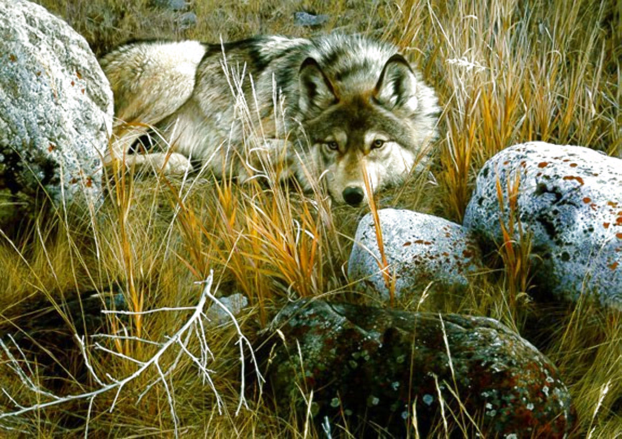 One-to-One (Grey Wolf) 1991 Limited Edition Print by Carl Brenders