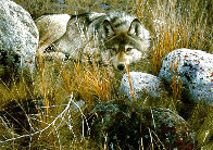 One-to-One (Grey Wolf) 1991 Limited Edition Print by Carl Brenders - 0