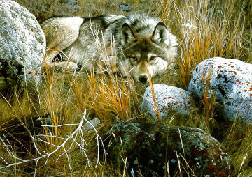 One-to-One (Grey Wolf) 1991 Limited Edition Print - Carl Brenders