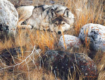 One to One - Gray Wolf 1991 Limited Edition Print - Carl Brenders