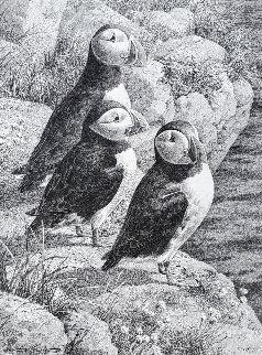Puffins 19x15 Drawing - Carl Brenders