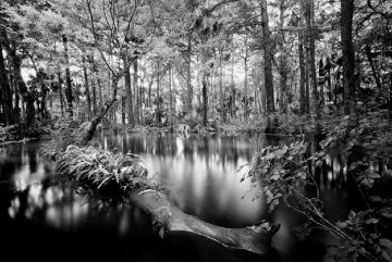 Loxahatchee River #1 Unique 1991 Panorama - Clyde Butcher