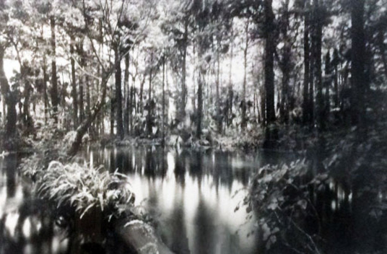 Loxahatchee River 1 Panorama by Clyde Butcher