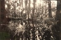 Loxahatchee #5 1991 Florida Panorama by Clyde Butcher - 0