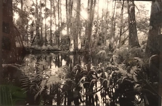 Loxahatchee #5 1991 Florida Panorama by Clyde Butcher
