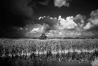 Ochopee Western Everglades  Panorama by Clyde Butcher - 0