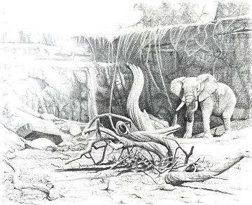 Untitled - Elephant Study 20x24 Drawing - Craig Bone