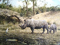Untitled Rhinoceros 1995 29x50 Original Painting - Craig Bone