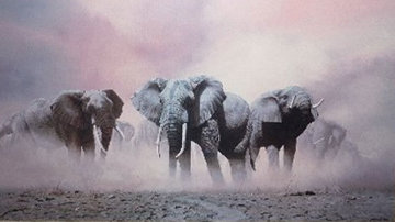 Ghosts of Etosha Limited Edition Print by Craig Bone