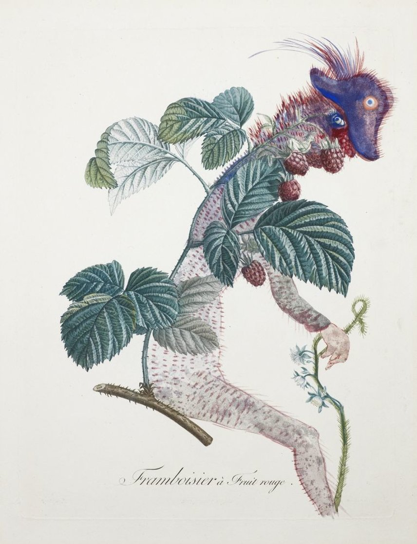 Framboisier (Raspberry) 1969 (Early) Limited Edition Print by Salvador Dali
