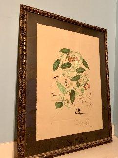 Flora Dalinae: Passiflora Laurigera 1964 Limited Edition Print - Salvador Dali