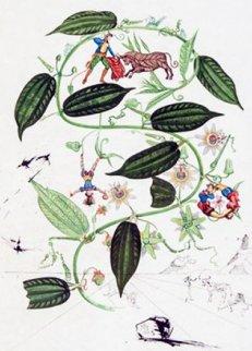 Flora Dalinae: Passiflora Laurigera 1964 (Early) Limited Edition Print - Salvador Dali