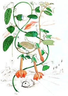 Cobea (Pisum Sensuale) 1968 (Early) Limited Edition Print - Salvador Dali