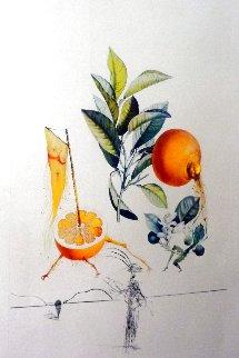 Pamplemousse E'rotique (Grapefruit) Flordali Les Fruits 1969 (Early) Limited Edition Print - Salvador Dali