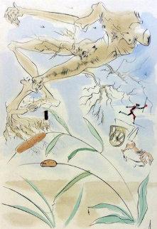 Le Bestiaire De La Fontaine Dalinise, Le Chene Et Le Roseau Limited Edition Print - Salvador Dali