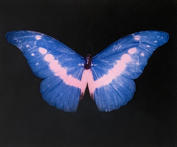 Blue Butterfly (Small) 2014 Limited Edition Print - Damien Hirst