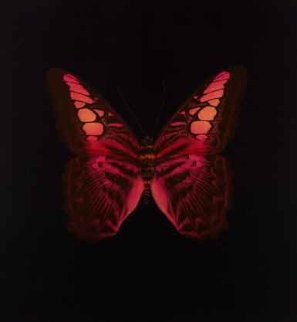 Untitled 01 - Memento  2008 Limited Edition Print - Damien Hirst