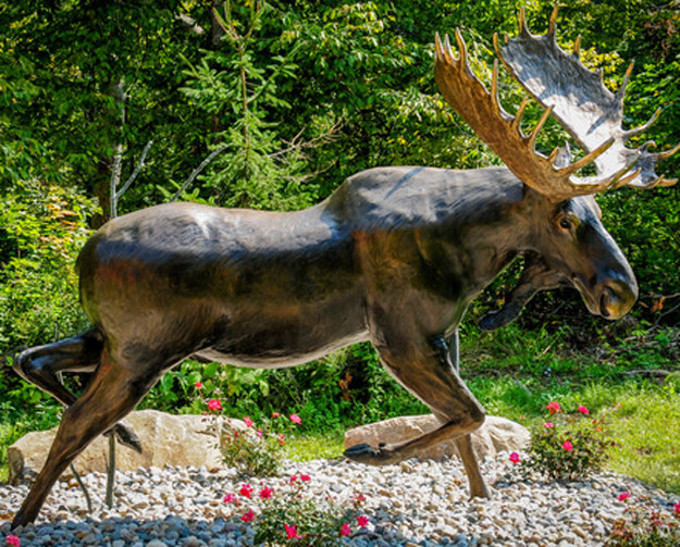 Ditch Creek Two-Step - 1/4 Life Size Moose Bronze Sculpture 2003 36 in Sculpture by David  Anderson