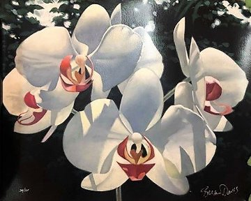 Four Phalaenopsis 2000 Limited Edition Print by Brian Davis
