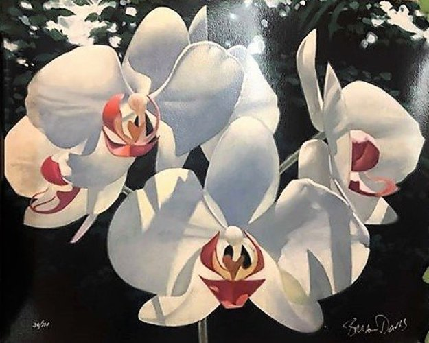 Four Phalaenopsis 2000 Limited Edition Print by Brian Davis