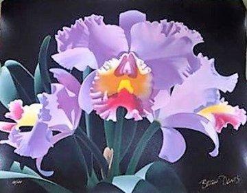 Violet Cattleya 2000 Limited Edition Print by Brian Davis