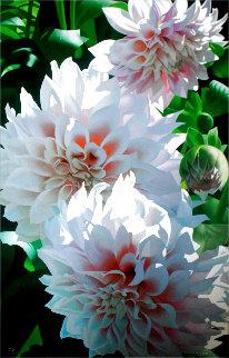 Pink Dahlias Limited Edition Print - Brian Davis