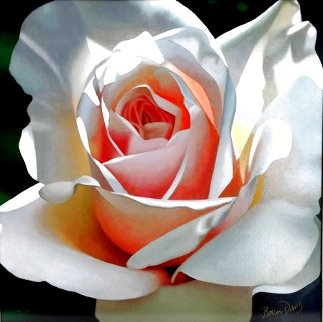Single Rose Limited Edition Print - Brian Davis