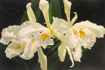 Pale Yellow Cattleya 24x36 Original Painting by Brian Davis