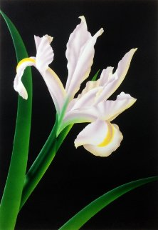Iris I 1980 Limited Edition Print - Brian Davis