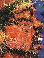 \Jimi Hendrix 1993  70x54 Original Painting - Denny Dent
