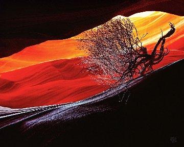 Burning Bush Panorama by Michael Fatali