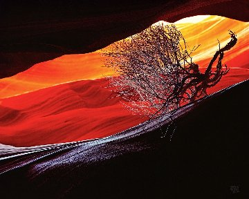 Burning Bush Panorama by Michael Fatali
