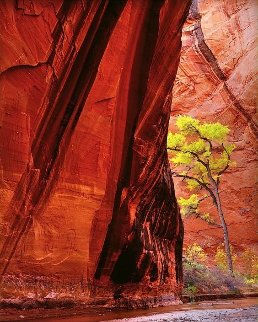 Canyon Voices 1998 Panorama by Michael Fatali
