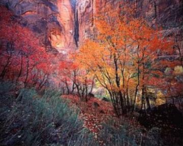 Autumn in Zion AP Panorama - Michael Fatali