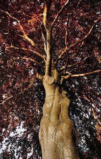 Medusa Limited Edition Print - Mick Fleetwood