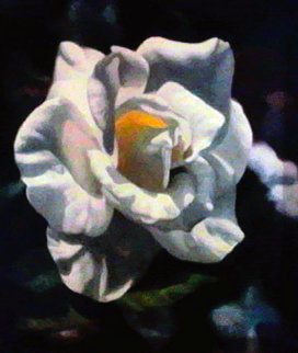 Rose I Limited Edition Print by Michael Gerry