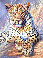 Leopard 1995 24x30 Original Painting - Grant Hacking
